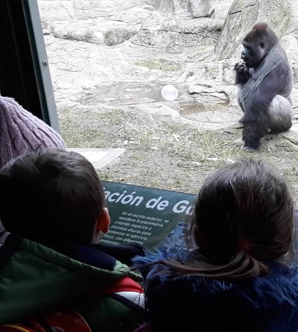 Visita zoo Educación Infantil El Porvenir