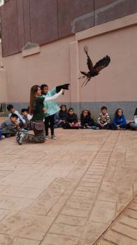 Animales en el aula. Fauna en acción. Ciclo Inicial