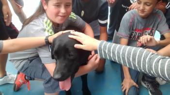 Un perro guía de la ONCE en clase