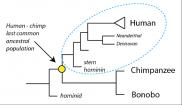 """Curso """"Introducción a la Evolución. Biología evolutiva para no especialistas"""""""